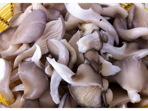 蘑菇吃了几十年,第一次见这吃法,给肉不换,上桌就扫光,太香了