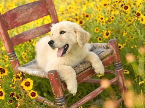 趣味测试:选个你最想领养的狗狗,测一下你的爱情能否经得住考验