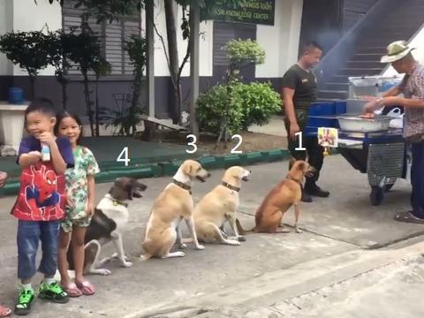 """狗狗自觉排队吃烤肉,队伍中没""""人""""插队,老板:每天都来"""