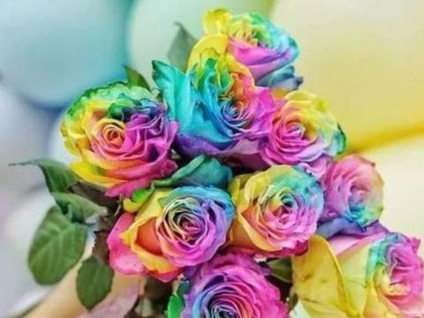 """""""稀有玫瑰""""彩虹玫瑰,百媚千娇,清新脱俗,可以说是养花必备"""