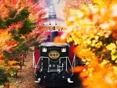 """赏""""京都第一名胜"""",到世界最美的树道:来一场秋季狂欢!"""