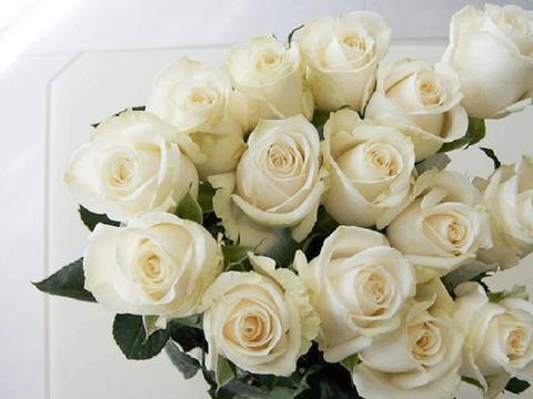 """""""精品玫瑰""""芬德拉,花开如美,无暇纯洁,可以说是养花必备!"""