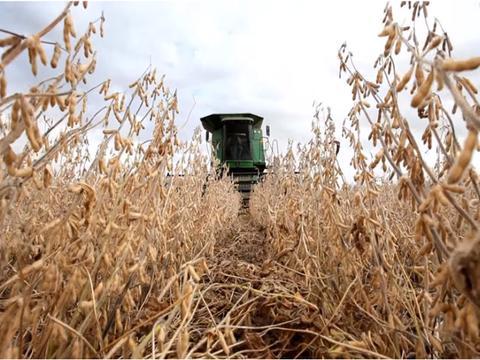 2国对华出口,北美118万吨大豆运往中国后,国产大豆迎重大机遇!