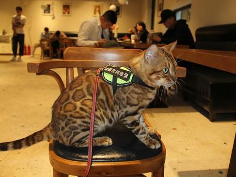 遛猫已经三年了,这个十一长假我又携小豹子LUCKY出去遛了