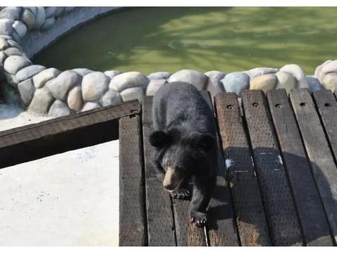 南京金牛湖野生动物王国游玩攻略