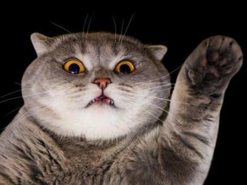 猫的视力很好吗?