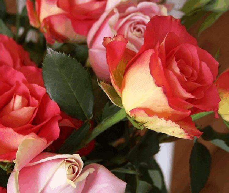 """喜欢菊花,就养盆""""珍品玫瑰""""彩纸口红,花开似唇彩,鲜艳夺目"""