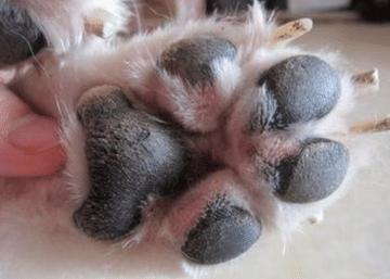 狗狗的脚掌很脆弱,小小细节影响极大,日常照看不可大意