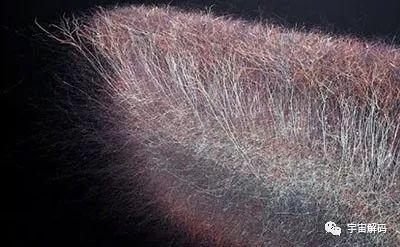 人类大脑有多少个神经元细胞