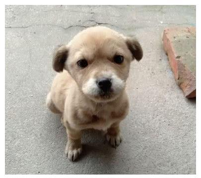 养了只小奶狗,被人偷走一礼拜后,女孩听到门口的狗叫声泪目