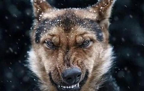 惩罚狗狗需谨慎,可能一次惩罚,就能让它恨死你!