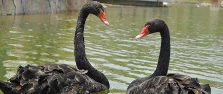 这份金牛湖野生动物王国游玩攻略,建议收藏