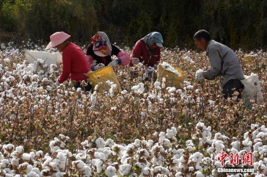 专业合作社有效助力新疆贫困户脱