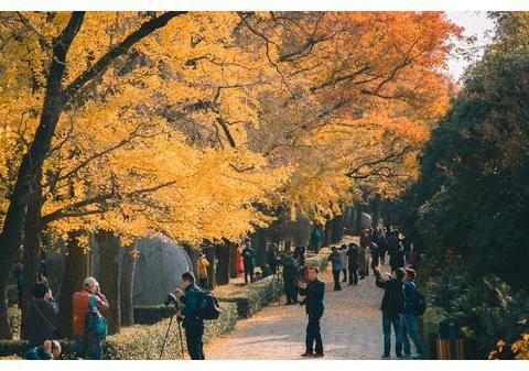南京最美步道原来在这里,五彩斑斓的童话世界,去一次终身难忘