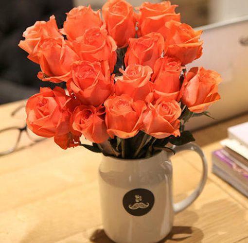 """喜欢玫瑰,不如养盆""""精品玫瑰""""影星,花开靓丽粉艳,惹人喜爱"""