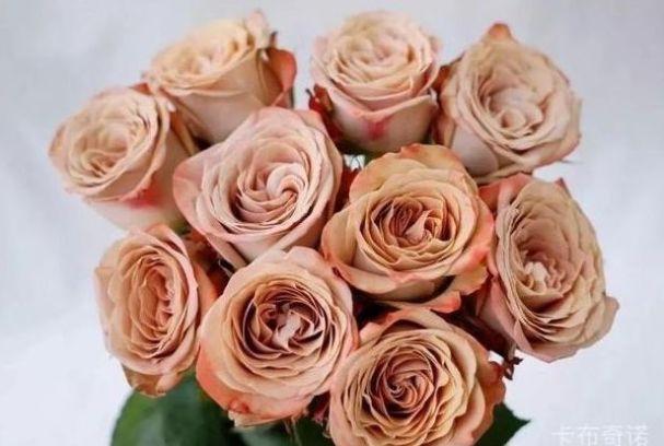 """""""高档玫瑰""""卡布奇诺,牛奶般丝滑,咖啡般花色,堪称养花必备"""