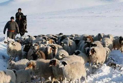 """法国人民""""抱怨这个冬天太冷"""",看看西伯利亚的牧民是怎么过的"""