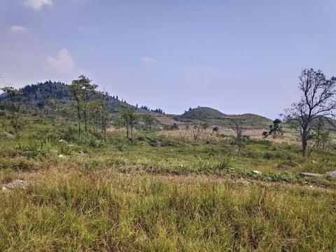 贵州省关岭县岗乌镇,这么贫瘠的土地居然还有人种植粮食