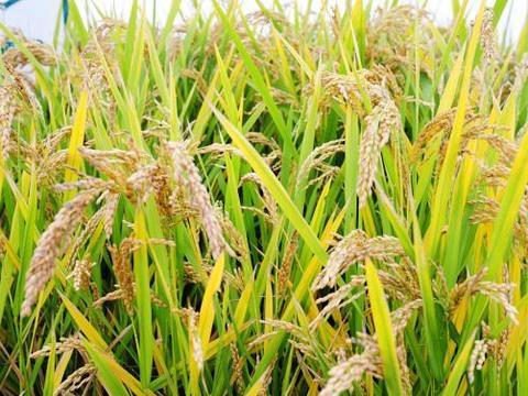 赏稻田画,住被动房,曹妃甸许你一场深秋时节的多彩之旅