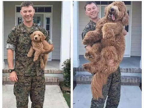 看铲屎官和狗狗十年的变化,令人心疼!我刚好长大,你却老了!