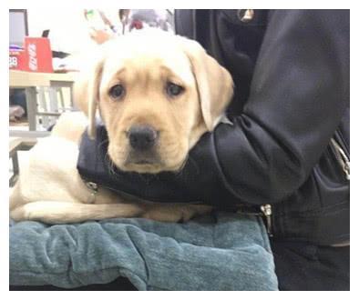 男子买回一只宠物狗,女友见后却和它过不去,说出的真相挺无奈