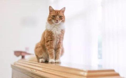 猫咪三年来准时参加了一百场葬礼,主人知道后惊呼:它是摆渡人!
