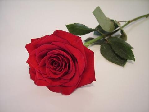 10月16号爱情日,桃花运旺盛,真爱降临,脱单路上遇幸福的3生肖