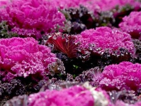 """这些好花都能""""捡来"""",花根栽盆里,能开花能观赏,比绿萝强多了"""