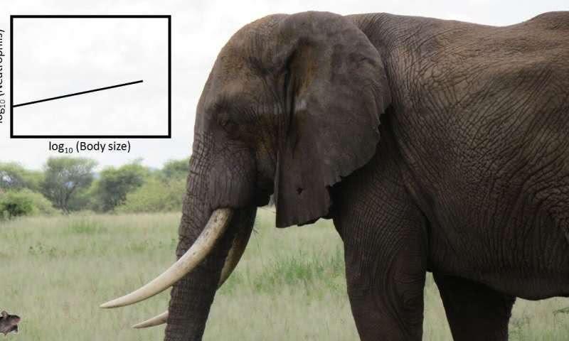 老鼠和大象,谁能更有效地抵抗感染?