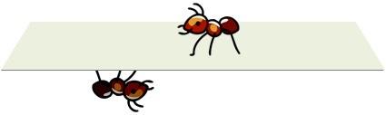 蚂蚁在纸面上可以发现三维空间吗?