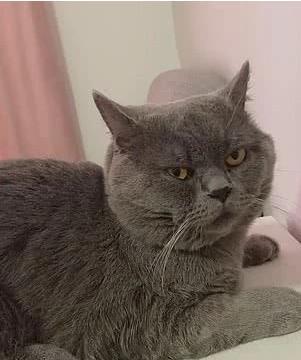 """远离黑心宠物店,公猫一夜间与五只母猫""""一拍即合"""",累到输液"""