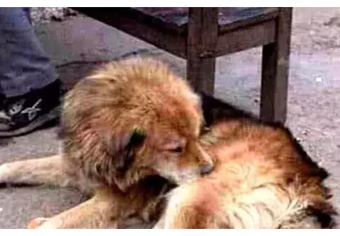 狗狗在生命最后一刻,拼尽全力跟主人道别,场景令人动容
