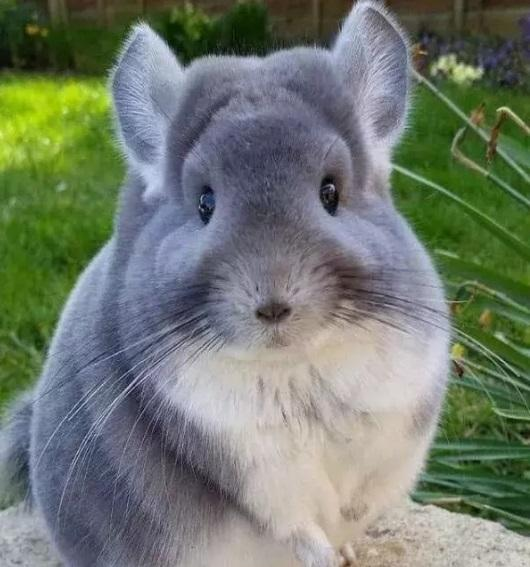 可爱的动物没有之一,长得不好看,但网友们都想要
