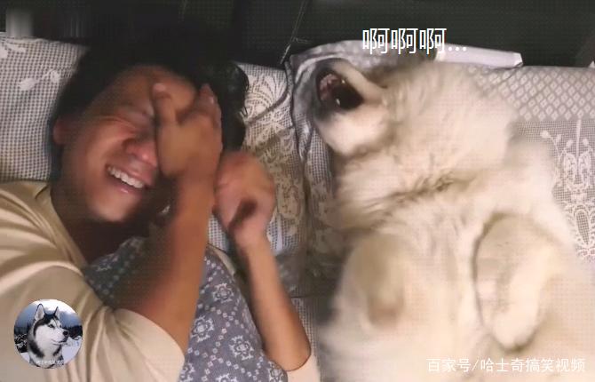 女主让大白狗叫男友起床,可是半天不见人,狗子想了个馊主意