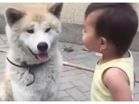 小宝宝教训自家大狗狗,狗子以吻封口:终于清静啦!