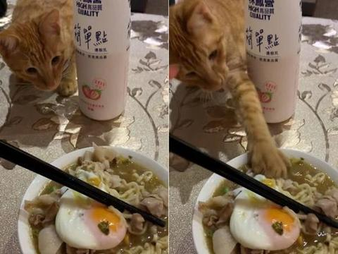 """泡面吃到一半橘猫手直接插汤里""""抓走肉片"""" 她吓到爆粗口"""