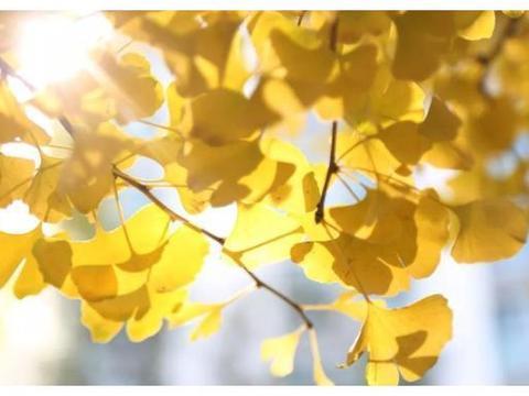 金黄金黄,西宁这里成了新网红