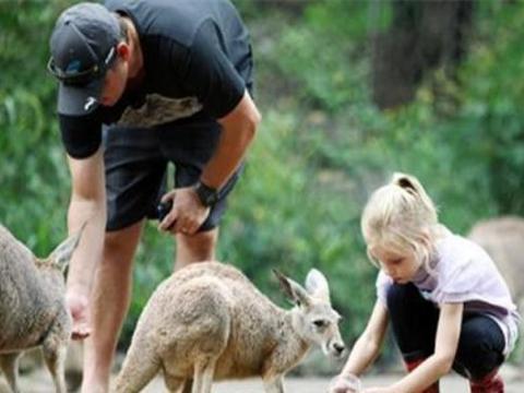 澳洲野兔泛滥成灾,当地人求助中国,网友:是吃成濒危还是回忆
