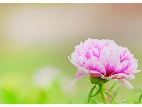 七首蝶恋花,不知道是诗中的美景衬托了你还是诗中的故事感染了你