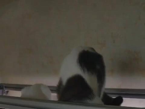 两只猫趴在鱼缸上面,不吃鱼光喝水,网友:随机舔走一条幸运鱼