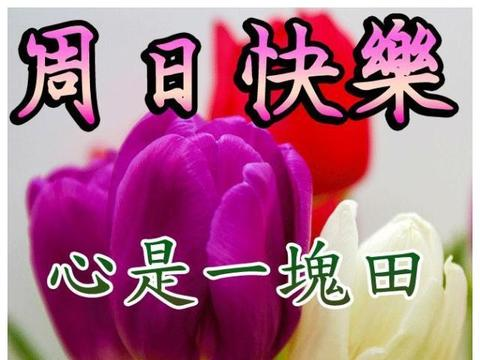 周末愉快祝福语图片,早安送你暖心问候