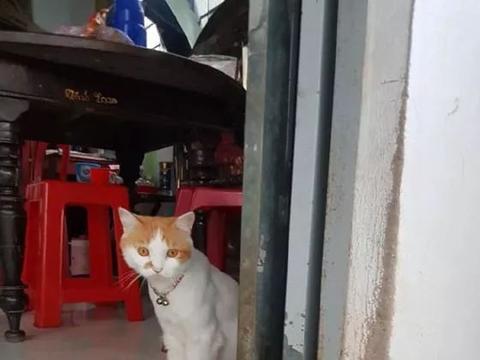 猫给主人抓了3只老鼠,还特意躲在角落里看,主人会不会收!