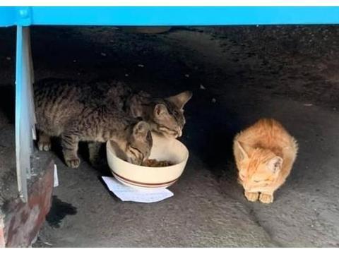 喂浪猫碗底下压着1张字条,爱妈做好被骂准备,结果看后却超暖