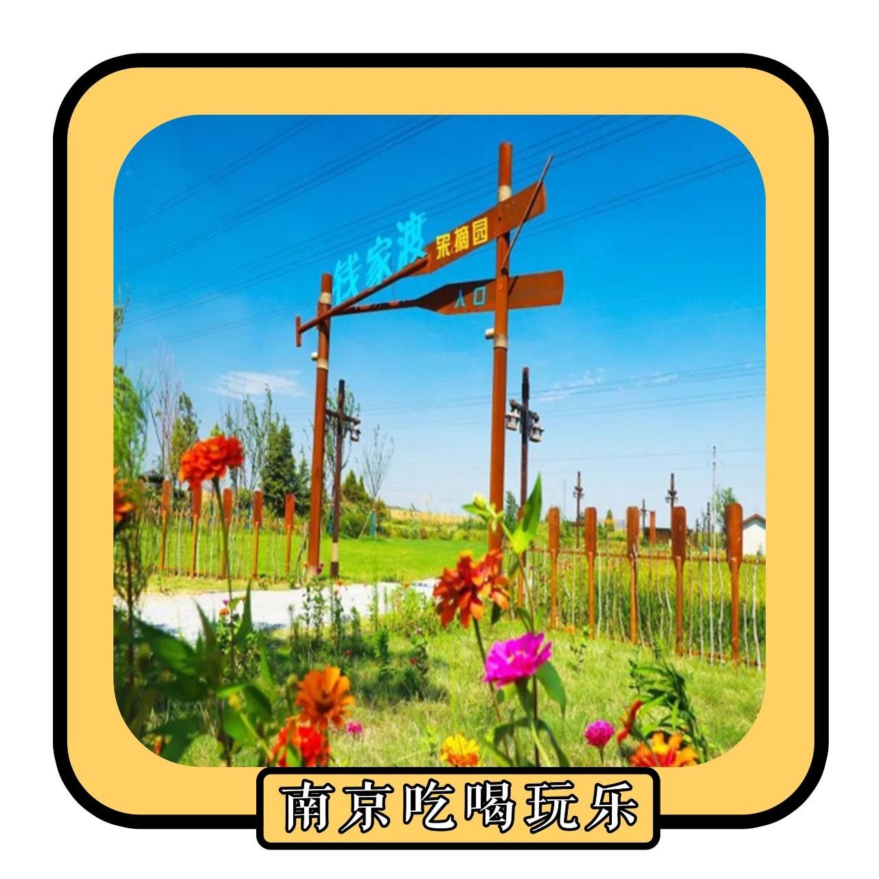 粉黛乱子、格桑花海!10月南京最值得去的地方,千万别辜负大好时光!
