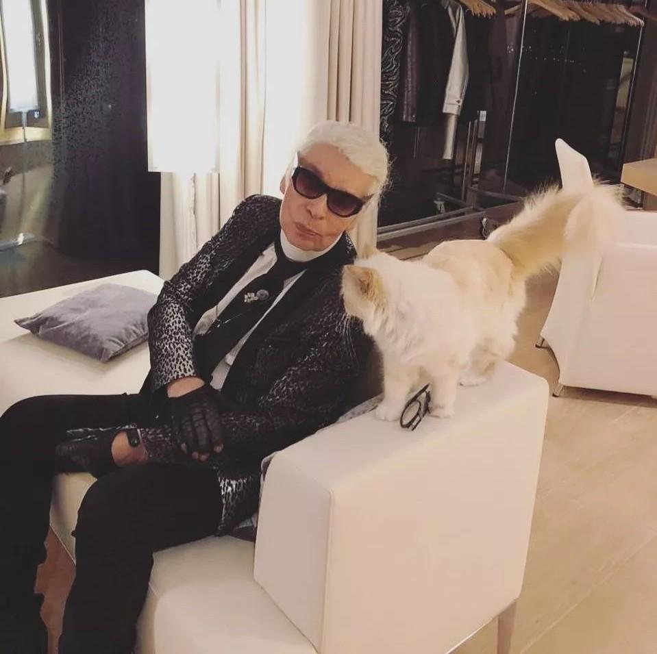 老佛爷那只年挣300万欧元,差点继承他遗产的猫,消失8个月后终于回来了