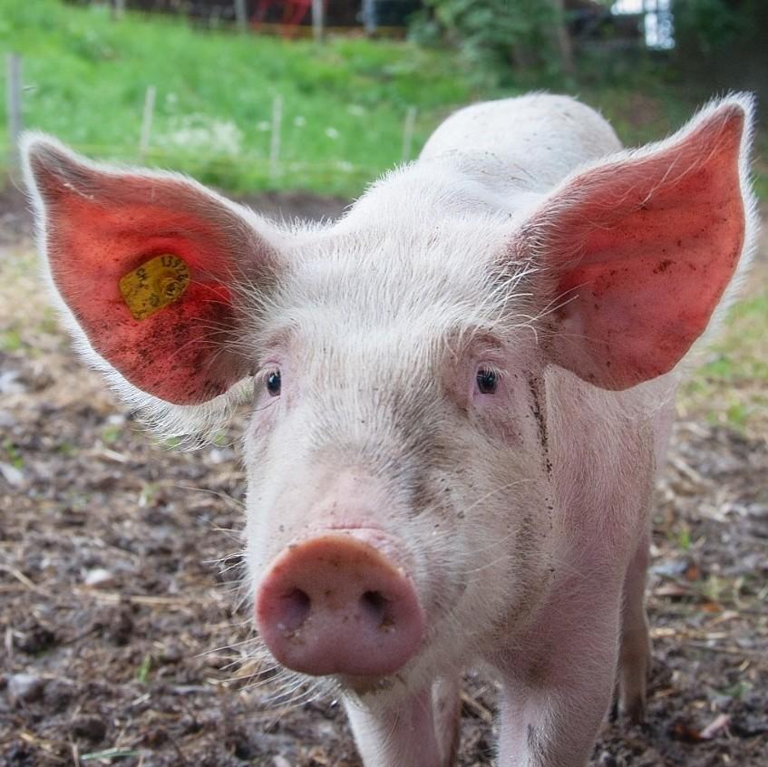 三季度CPI同比涨3%,猪价在CPI中权重能否适度调低?