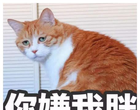 橘猫夜不归宿,第二天拐了个小母猫回家,铲屎官坏笑:你可真行