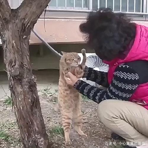 阿姨在车边发现一只猫,看到猫咪的前爪心疼了,于心不忍带回家