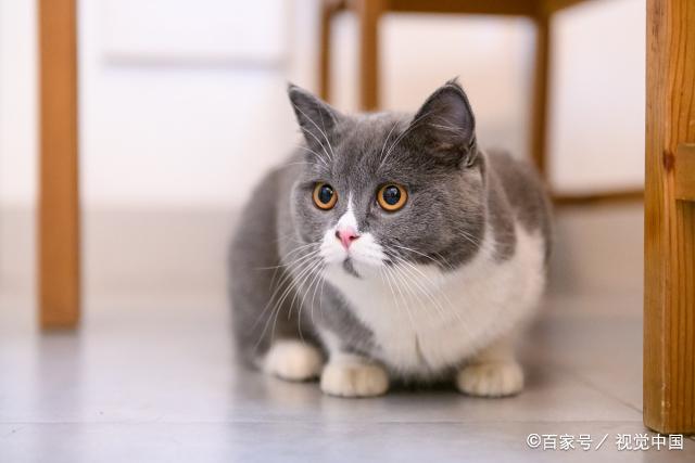 猫咪咬你、踩你、抓你,是因为讨厌你吗?那可不一定哦!