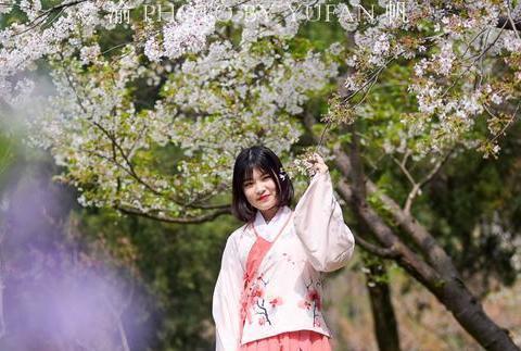 扬州美女穿汉服赏花,引得国外游客争相合影,直言比韩服和服更美